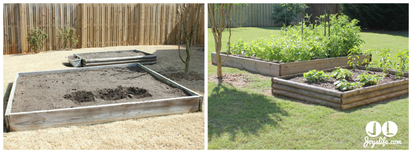 Our Yard and Garden Spring Plans Give Me Green
