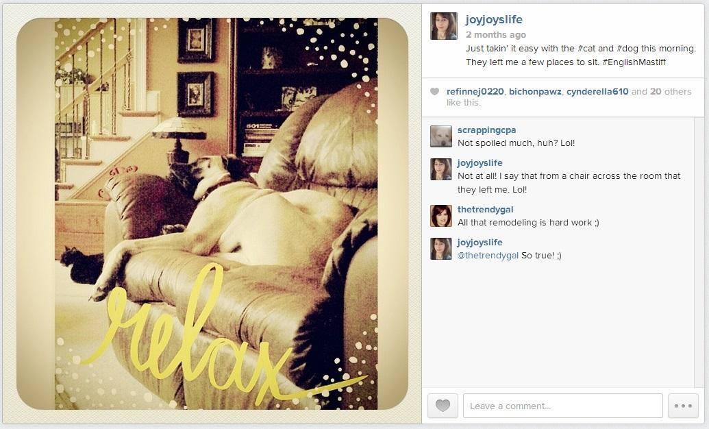 Sleeping cat and #EnglishMastiff #puppy #Joyslife #Instagram #EnglishMastiff #puppy #tuxedocat