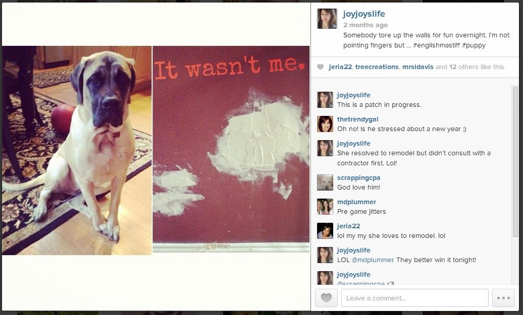 #Saban tearing up the wall #Joyslife #Instagram #EnglishMastiff #puppy