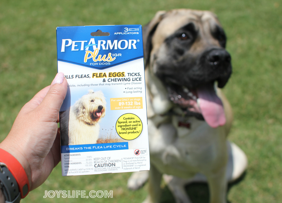Keeping My Dog, Saban, Healthy and Happy This Summer #petarmorprotects #EnglishMastiff #puppy