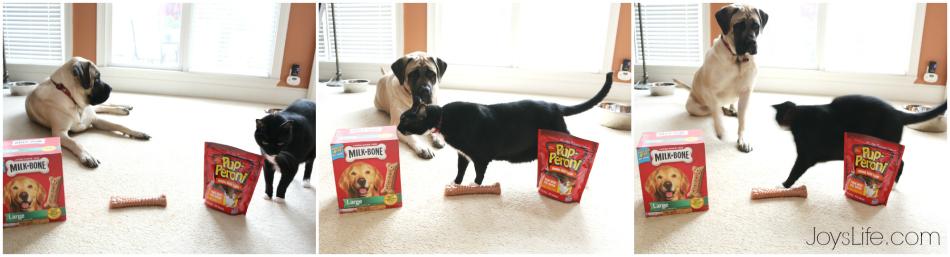 Easy Vinyl Dog Bowl DIY with Milk-Bone & Pup-Peroni  #TreatThePups #Ad #SilhouetteCameo #DIY #EnglishMastiff #DogBowl