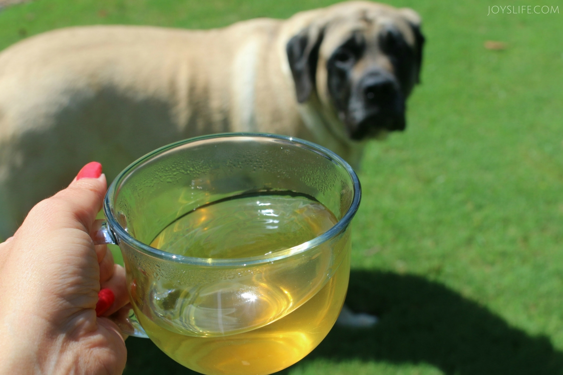 English Mastiff Zen Tea