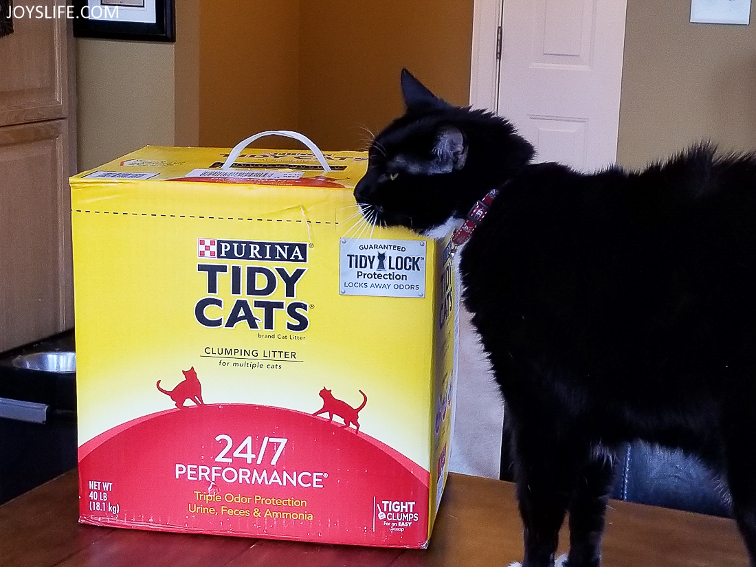 Tidy Cats at home